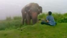 หนุ่มขี้เมา กวนใจช้าง สุดท้ายเละ!!