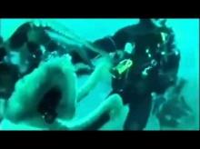 วินาทีโหด!ปลาหมึกยักษ์ จู่โจมนักดำน้ำ