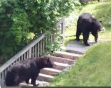 จะเป็นยังไงหากมีหมี 2 ตัวมากัดกันหน้าบ้านคุณ!!