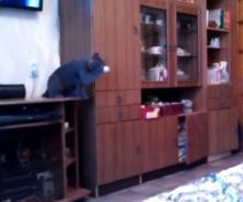 ของเล่นแมว เจอแบบนี้ตบทั้งวัน