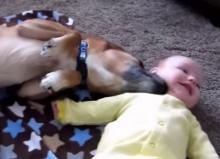 น่ารักฟรุ้งฟริ้ง สุนัขอ้อนเด็ก