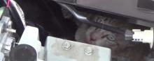 ช่วยเหมียว ติดในกระโปรงรถ กรุงเทพฯถึงอ่างทอง