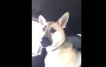 มาดูกัน! เมื่อเจ้าหมาได้ยินเพลง Animals ของ Maroon5 จะเป็นไง??