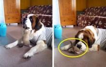 นี้คือวิธีจัดการของ เจ้าตูบ เมื่อลูกแมวกวนใจ !! น่ารัก