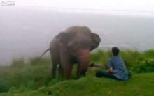 หนุ่มเมาแล้วซ่ากับช้าง...สุดท้ายเกือบตาย!!