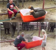 ขำแพรบ!! ช้างน้อยตีลังกาลงอ่าง!! โชว์นักท่องเที่ยว