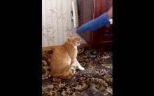 อย่าแหย่แมวขี้โมโห ไม่งั้นเจอแบบนี้ คลิกเลย!!