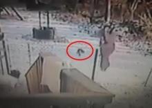 ดุยิ่งกว่าหมา!! แมวแค้นถูกสาวเตะหิมะไล่ กระโดดพุ่งใส่จนล้มตึงไปกับพื้น!! (ชมคลิป)