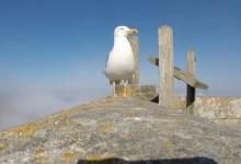 นกขี้สงสัยแอบคาบกล้องจิ๋วก่อนโบยบิน จึงเกิดภาพสวยๆขึ้นมา!!!