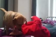 หมาฮีโร่!! นาทีน้องหมาช่วยชีวิตเจ้านายให้รอดตายจาก ลมชัก!!