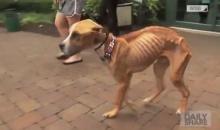 สลดใจ!!! คนใจร้ายผูกน้องหมาทิ้งไว้ ปล่อยให้อดอาหารผอมเหลือแต่กระดูก!!