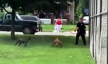 นาที ตร. ใช้ปืนยิงน้องหมา หลังวิ่งไล่กัดคนกลางสนามเด็กเล่น