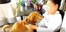 นี่ล่ะเพื่อนแท้!!!น้องหมาแสนรู้เห็นเจ้าของเศร้า มันเลยรีบทำแบบนี้เลยอ่ะ!!!