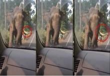 ลุ้นจนเเทบลืมหายใจ!! เมื่อเผชิญหน้ากับช้างเขาใหญ่ ไอ้งาเดียว
