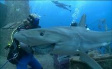 ฉลามแสนรู้!! เจ้าชาร์คกี้ มันทำสิ่งนี้! (คลิป)