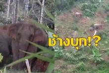 เปิดคลิประทึก! นาที 11 ช้าง ยกโขลงบุก