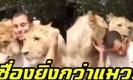 ลาออกจากการเป็นราชสีห์เดี๋ยวนี้!! สิงโตสุดเชื่อง คลอเคลียอ้อนมนุษย์ยิ่งกว่าแมว (คลิป)