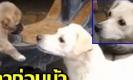 """ชาวเน็ตแห่แชร์คลิปเรียกน้ำตา """"แม่หมาจูบลาลูก"""" สุดซึ้งกินใจ (มีคลิป)"""