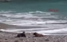 เจ้าตูบแสนรู้ วิ่งขวางทางหนูน้อย ที่กำลังคลานลงทะเล