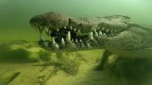 นาทีระทึก ไอ้เข้บอตสวานาเขมือบกล้องของนักสำรวจใต้น้ำ