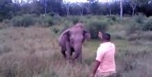 ชาวเน็ตทึ่ง คาถาหยุดช้างใช้ได้จริง?!
