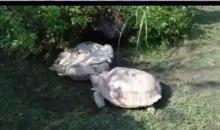 ชัดๆ!! น้ำใจอ่ะ ไปดูมิตรภาพของเต่ากัน