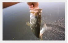 เหลือเชื่อ! การจับปลาที่ไวที่สุดในโลกใช้เวลาแค่ 8 วินาที