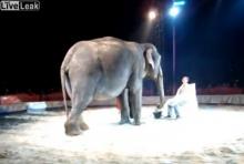 เคยเห็นไหม?? ช้างโกนหนวด!!