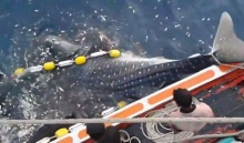 นาทีชีวิต ฉลามวาฬติดอวน ชาวประมงโดดช่วยปลดอวน