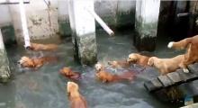 น้องหมา โกลเด้นวัดใหญ่สว่างอารมณ์ ลงเล่นน้ำคลายร้อน