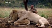 ชายที่ใช้ชีวิตอยู่กับสิงโต !!!