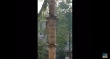 คลิปนี้ใครไม่เคยเห็นดูเอาไว้ การขึ้นต้นไม้ของ งูเหลือม