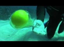จะเกิดอะไรขึ้น!!! ถ้าเอาไข่สดไปตอกใต้ทะเล!!!