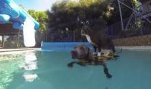 ทาสแมวกรี๊ด!! Didga เหมียวสุดฉลาดกับความสามารถพิเศษสุดทึ่ง!!