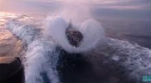 นาทีระทึกใจ..วาฬเพรฌฆาตว่ายน้ำตามเรือนักท่องเที่ยว