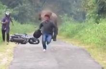 ต่างประเทศก็มี!!...เจอช้างปุ๊บทิ้งรถวิ่งหนีให้ไว