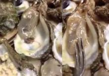 หอยนางรมสดๆ แต่เอ๊ะมีตัวอะไรซ่อนอยู่ในหอย??