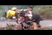 โหดมาก ช้างโมโห พังรถยับทั้งคัน