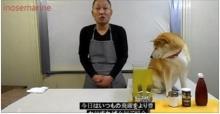 น่ารักเมื่อพ่อครัวญี่ปุ่นมีผู้ช่วยเป็นน้องหมา มาดูกันว่าผลงานจะเป็นอย่างไร