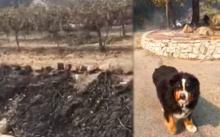 วินาทีสุดซึ้ง..ครอบครัวพบกับสุนัขพรากกันระหว่างหนีไฟไหม้ นึกว่าตายไปแล้ว!! (คลิป)