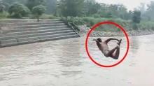 จำจนตาย!! หนุ่มกระโดดลงน้ำ หวังโชว์เพื่อน ผ่านไปไม่นาน ทำเพื่อนน้ำตาไหล! (คลิป)