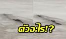 โซเชียลเเตกตื่น! ถ่ายติดสัตว์ประหลาดในน้ำ รูปร่างคล้ายงู (คลิป)