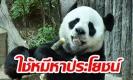 """สื่อนอกแฉไทย หากินกับ """"ช่วงช่วง"""" ฟัน 300 ล้าน ชาวจีนขอหมีคืน ห้ามส่งมาไทย (คลิป)"""