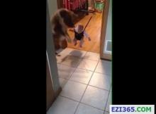 น้องหมาสอนเบบี้กระโดด น่ารักโคตร
