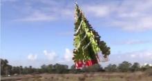 ตะลึง! ต้นคริสต์มาสบินได้