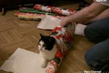 ของขวัญแบบนี้ พูดเลยว่าอยากได้อ่ะ!!