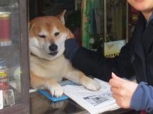เมื่อเจ้าหมาชิบะอินุ ขออาสาเป็นผู้ช่วยขายของ