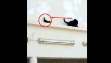 พิสูจน์กันไป..แมวกับนกใครเก๋ากว่ากัน!