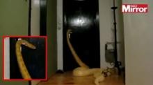 ล็อกประตูบ้านกันให้ดีๆเลย งูเหลือมสมัยนี้เปิดประตูเองได้ !?