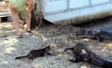 สุดยอด!! แมวปกป้องทาส ไล่จระเข้ 2 ตัวกระเจิง!!
